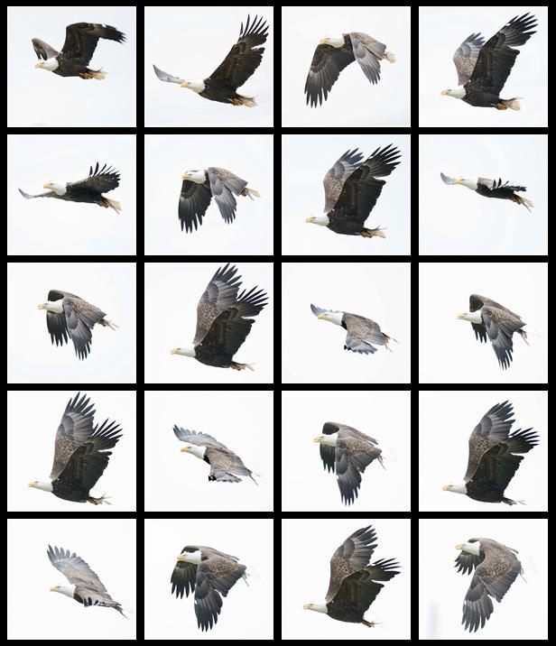 an analysis of a bird in